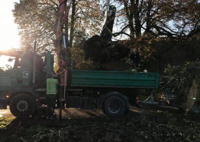 GaLaBau Poscher-Baumarbeiten - (4)
